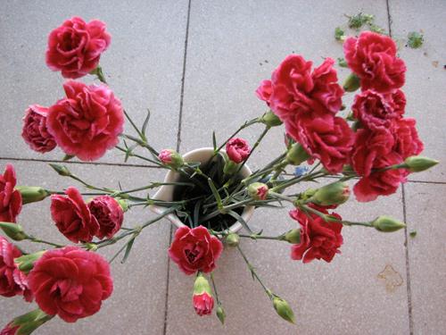 Floresdomingo