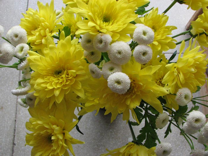 Floressol