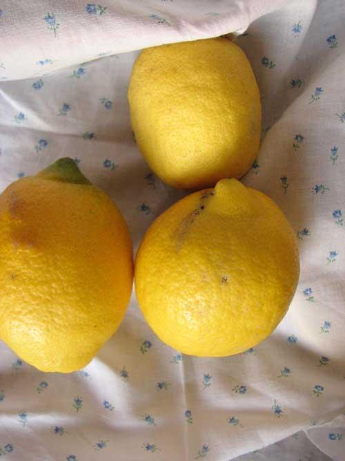 Amarelos
